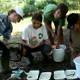 Alapítványunk egy programján a gyerekek a vízből fogott makrogerincteleneket vizsgálják